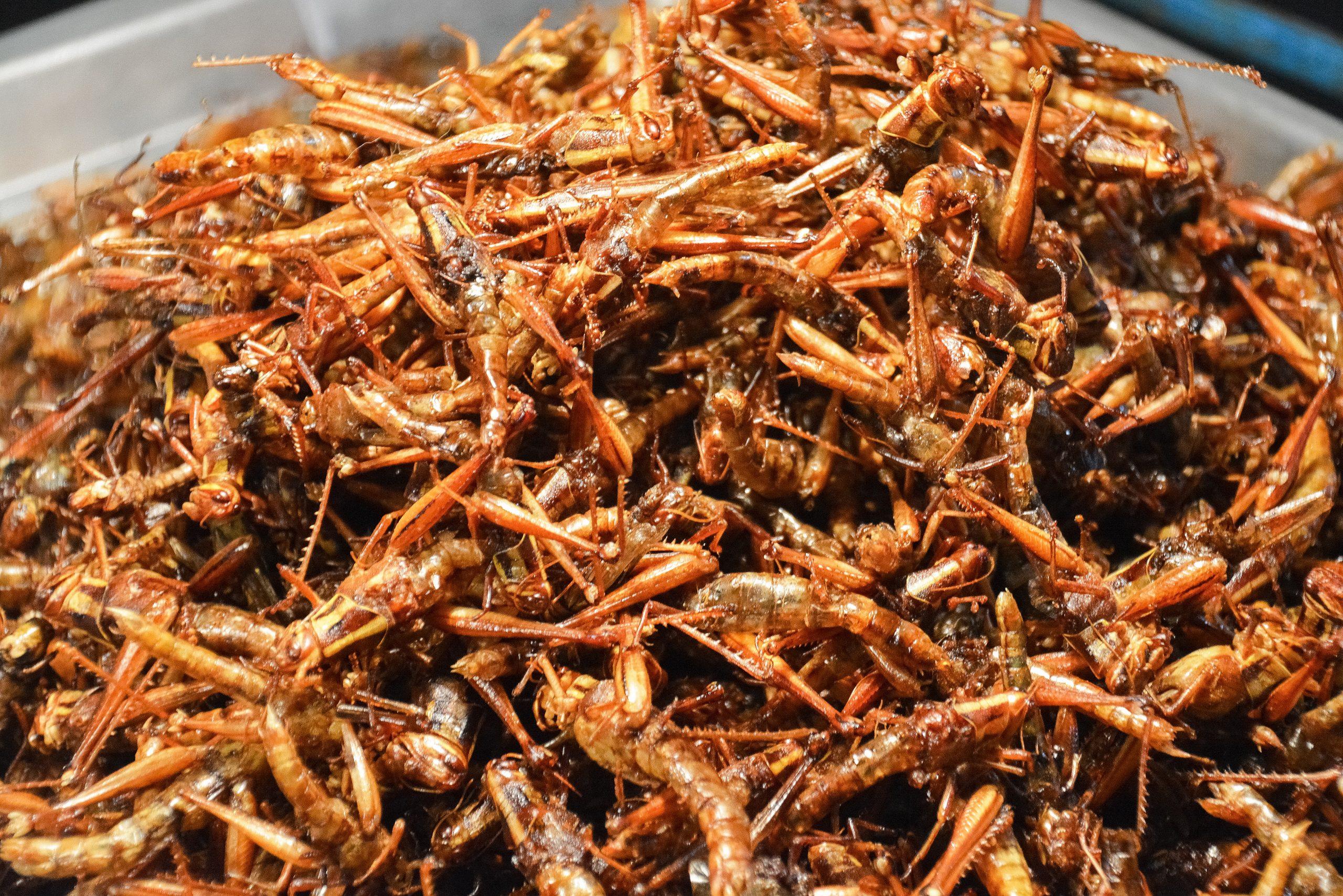 Mangeremo insetti parte 2
