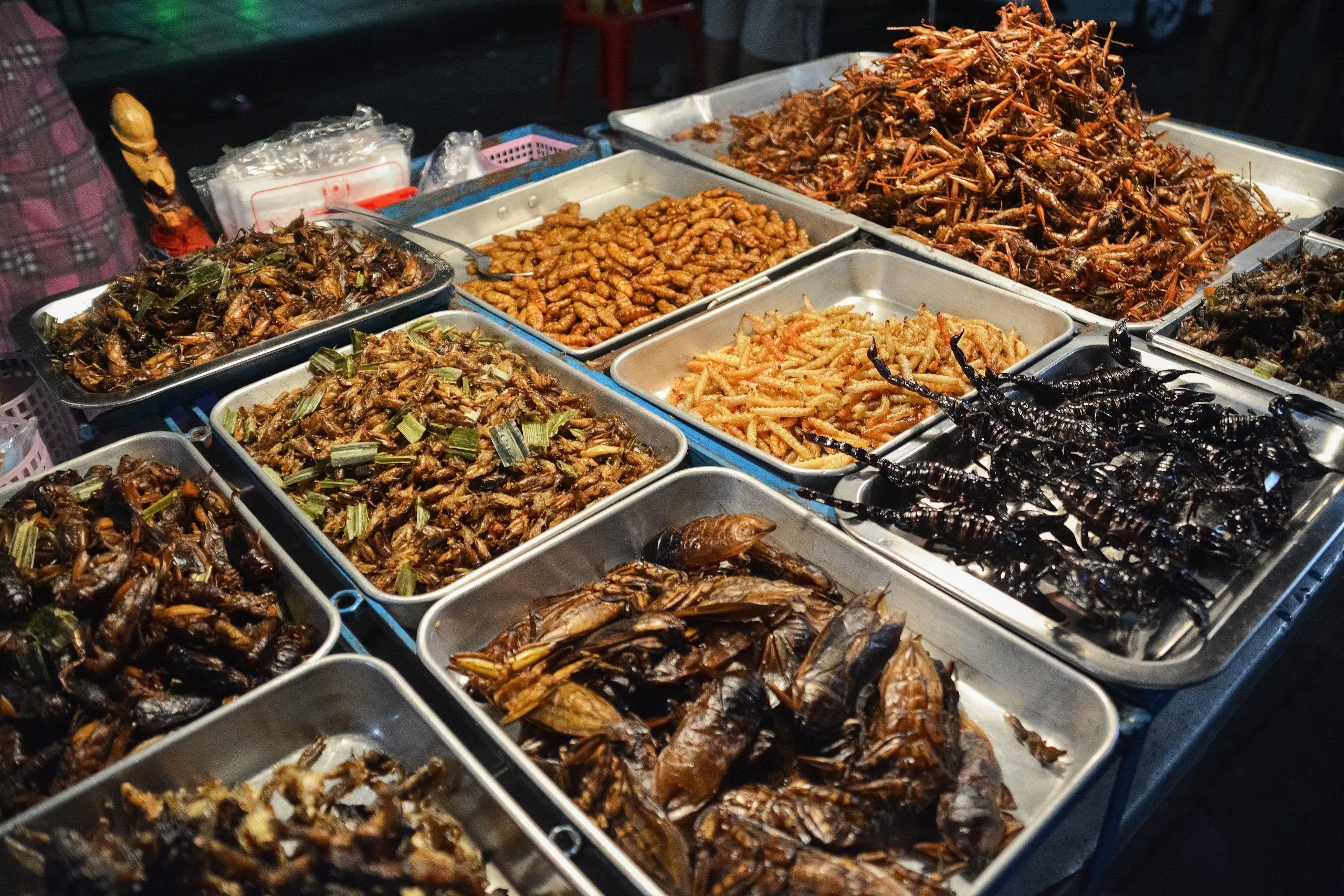 Mangiare insetti parte 1