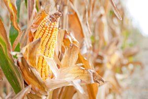 Giornata Mondiale Alimentazione Slow Food Bologna